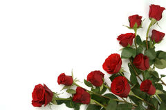 tła ostrości czerwone róże selekcyjne Zdjęcie Royalty Free