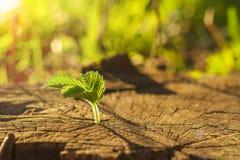 tła ostrości zieleni naturalny selekcyjny Fotografia Stock