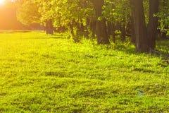 tła ostrości zieleni naturalny selekcyjny Zdjęcia Royalty Free