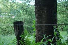 tła piękna koloru zieleni natura zdjęcia royalty free