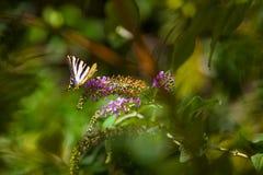 tła piękna koloru zieleni natura Obraz Stock