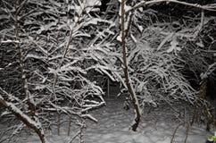 tła piękna projekta ogródu śnieżna zima twój Zdjęcia Stock