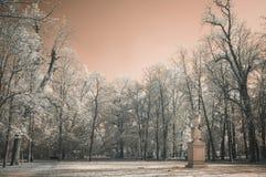 tła piękna projekta ogródu śnieżna zima twój Zdjęcie Royalty Free