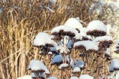 tła piękna projekta ogródu śnieżna zima twój Zdjęcia Royalty Free