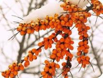 tła piękna projekta ogródu śnieżna zima twój Obraz Royalty Free