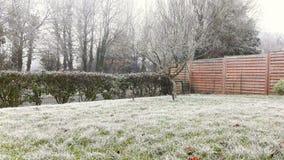 tła piękna projekta ogródu śnieżna zima twój Obrazy Stock