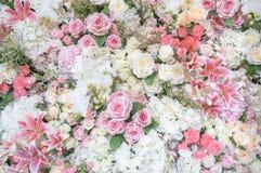 tła piękna szczegółowa flor zieleni liść tapeta Fotografia Royalty Free