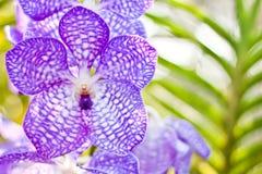 tła piękne liść orchidwith purpury Obrazy Royalty Free