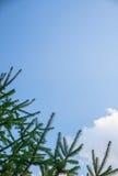 tła pięknych bożych narodzeń ilustracyjny drzewa wektor Zdjęcie Stock
