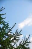 tła pięknych bożych narodzeń ilustracyjny drzewa wektor Obrazy Stock