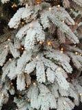 tła pięknych bożych narodzeń ilustracyjny drzewa wektor Zdjęcia Royalty Free