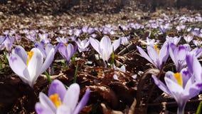 tła pięknych kwiatów lasowy ilustraci światło Obraz Royalty Free