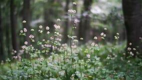 tła pięknych kwiatów lasowy ilustraci światło zdjęcie wideo