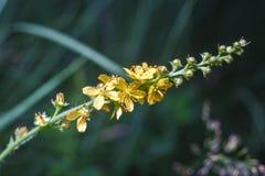 tła pięknych kwiatów lasowy ilustraci światło Zdjęcie Stock