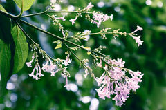 tła pięknych kwiatów lasowy ilustraci światło Obraz Stock