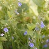 tła pięknych kwiatów lasowy ilustraci światło Fotografia Stock