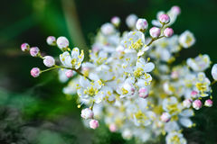 tła pięknych kwiatów lasowy ilustraci światło Zdjęcia Royalty Free