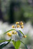 tła pięknych kwiatów lasowy ilustraci światło Fotografia Royalty Free