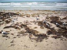 tła plaży para wręcza target2325_1_ chwytów seagulls Obrazy Royalty Free