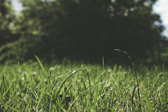 tła plamy trawy jeden rośliny lato Fotografia Stock