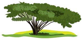tła podesłania drzewa wektoru biel ilustracja wektor