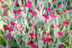 Tła pojęcie, Abstrakcjonistyczna tekstura zamazująca zieleń i czerwony kwiat, Fotografia Royalty Free