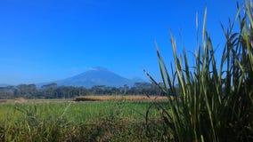tła pola trawy krajobrazu niebo Fotografia Stock