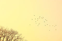tła ptasi półmroku niebo zdjęcie stock