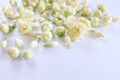 tła różnic kwiatów jaśminowy ładny sezonowy temat Zdjęcia Stock