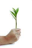 tła ręki drzewa Fotografia Stock