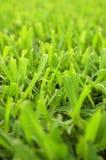 tła rżnięta trawy tekstura Obraz Royalty Free