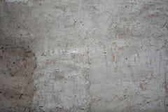 tła rośliny mała tekstury ściana zdjęcie stock