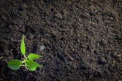 tła rośliny ziemia obrazy stock