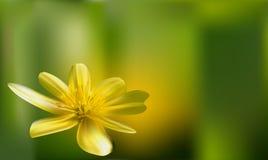 tła romantyczny kwiecisty Kwiat Różany zbliżenie na zieleni royalty ilustracja