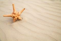 tła ryba piaska gwiazda zdjęcie stock