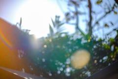 Tła słońca światła słonecznego plamy gradient, Abstrakcjonistyczna plama i Zamazujący park, naturalny tło, kopii przestrzeń dla t zdjęcia royalty free