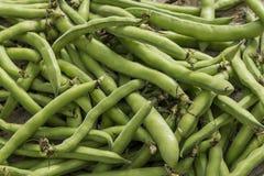 tła tło fasoli jedzenia zieleni serie Zdjęcie Royalty Free