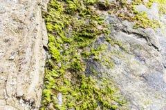 tła trakenów skały skalista kamieni struktura Zdjęcia Stock