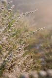 tła traw światło Zdjęcia Royalty Free