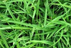 tła trawy zieleń Fotografia Stock