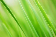 tła trawy zieleń zdjęcia stock