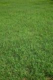 tła trawy zieleń Zdjęcia Royalty Free