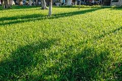 tła trawy zieleń naturalna Obraz Stock