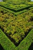 tła trawy zieleń opuszczać naturę zdjęcia stock