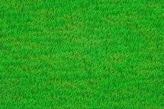 tła trawy zieleni gazon ilustracja wektor