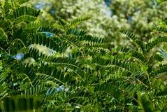 tła ulistnienia zieleń Zdjęcie Stock