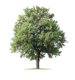 tła ulistnienia zieleni bonkrety bonkret czerwieni drzewo Fotografia Royalty Free