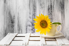 Tła wciąż życia kwiatu rocznika słonecznikowa drewniana biała filiżanka Obrazy Royalty Free