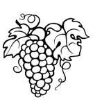 tła wiązki winogrona odosobniony biel Fotografia Royalty Free