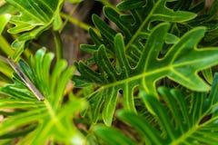 tła wiązki zieleń odizolowywał liść biały obraz royalty free